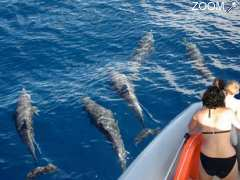 picture of Dauphins Martinique