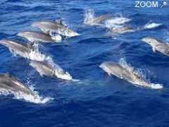 picture of PLANETE DAUPHINS